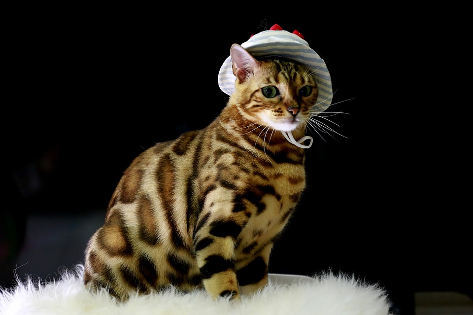 Do Bengal Cats Get Lonely?